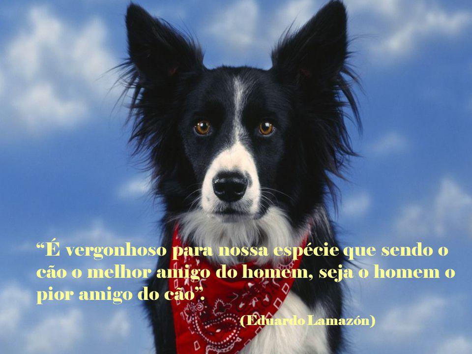 É vergonhoso para nossa espécie que sendo o cão o melhor amigo do homem, seja o homem o pior amigo do cão .