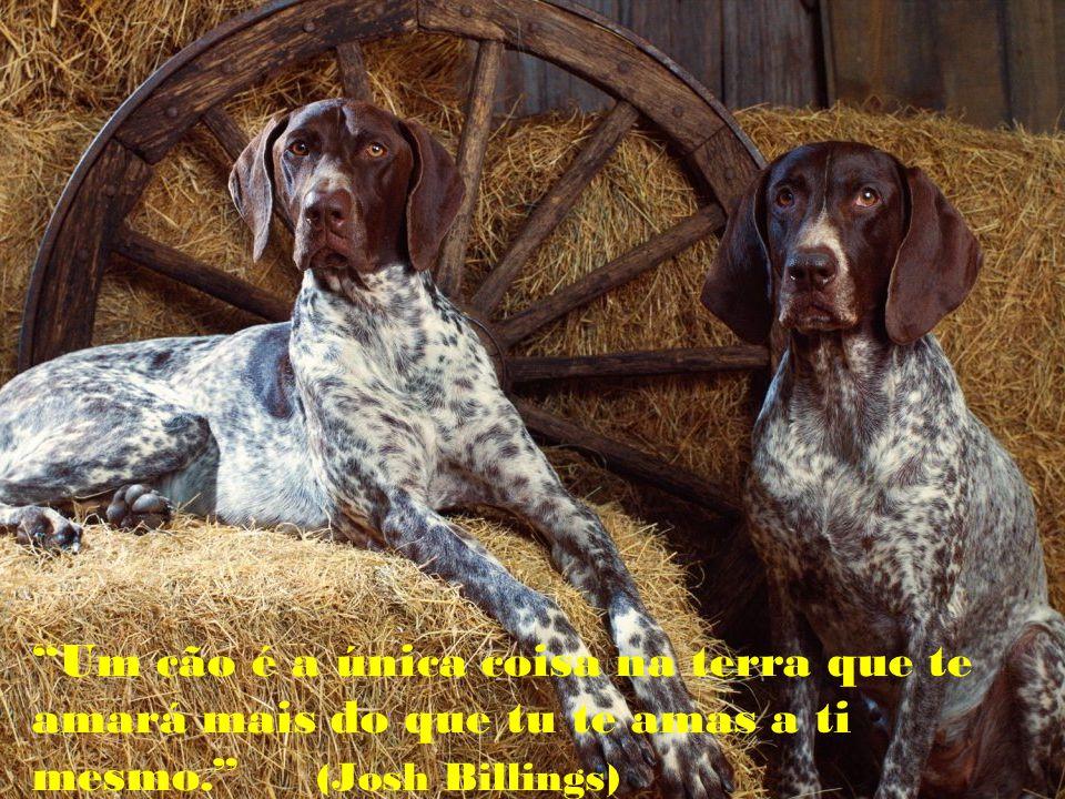Um cão é a única coisa na terra que te amará mais do que tu te amas a ti mesmo. (Josh Billings)