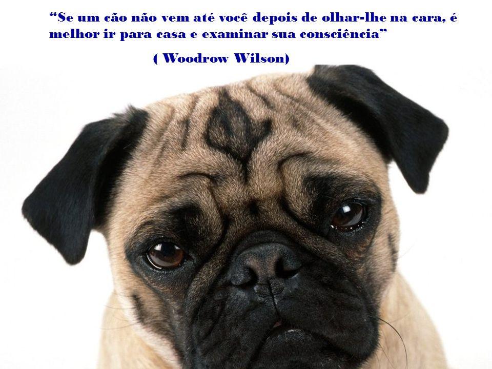 Se um cão não vem até você depois de olhar-lhe na cara, é melhor ir para casa e examinar sua consciência