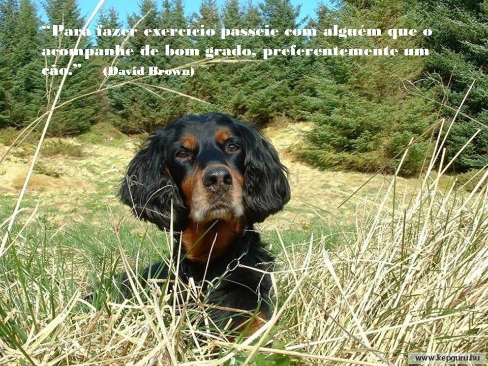 Para fazer exercício passeie com alguém que o acompanhe de bom grado, preferentemente um cão. (David Brown)