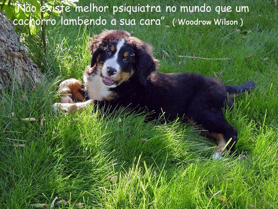 Não existe melhor psiquiatra no mundo que um cachorro lambendo a sua cara ( Woodrow Wilson )