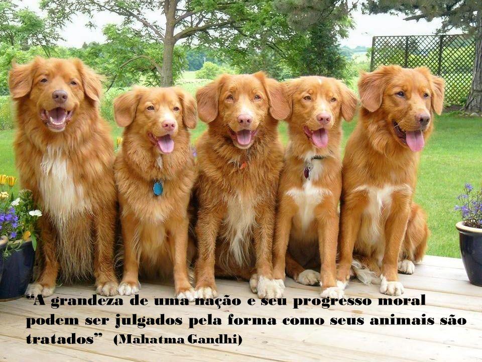 A grandeza de uma nação e seu progresso moral podem ser julgados pela forma como seus animais são tratados (Mahatma Gandhi)