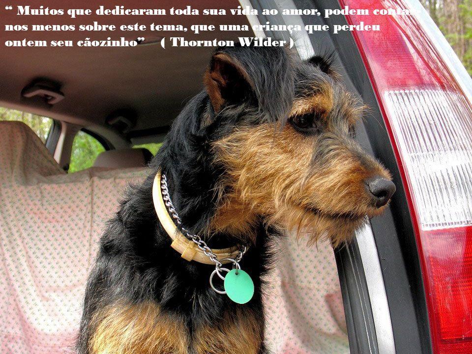 Muitos que dedicaram toda sua vida ao amor, podem contar-nos menos sobre este tema, que uma criança que perdeu ontem seu cãozinho ( Thornton Wilder )