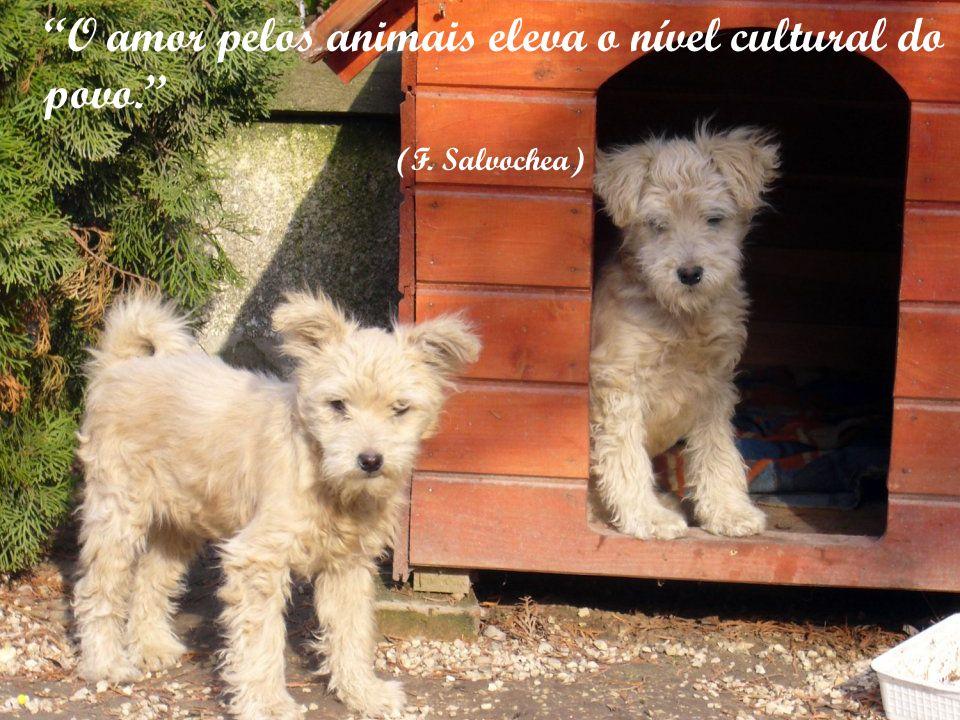 O amor pelos animais eleva o nível cultural do povo.