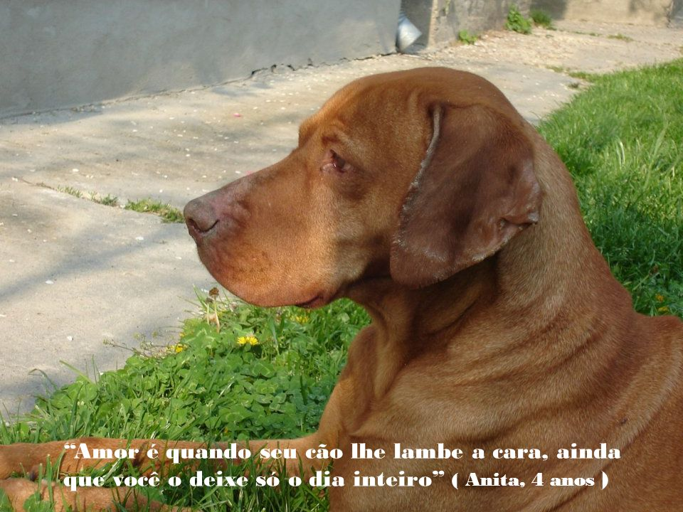 Amor é quando seu cão lhe lambe a cara, ainda que você o deixe só o dia inteiro ( Anita, 4 anos )
