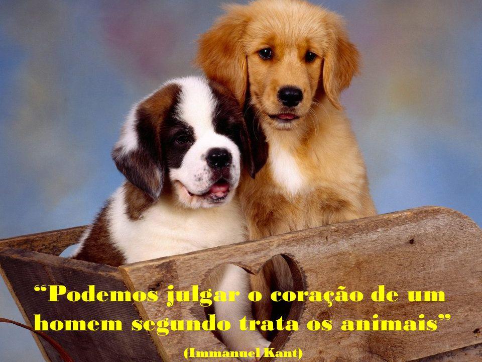Podemos julgar o coração de um homem segundo trata os animais