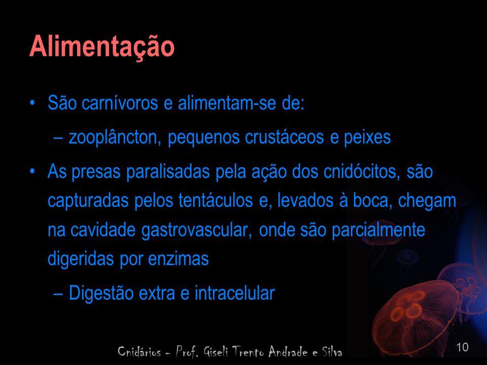 Cnidários - Prof. Giseli Trento Andrade e Silva