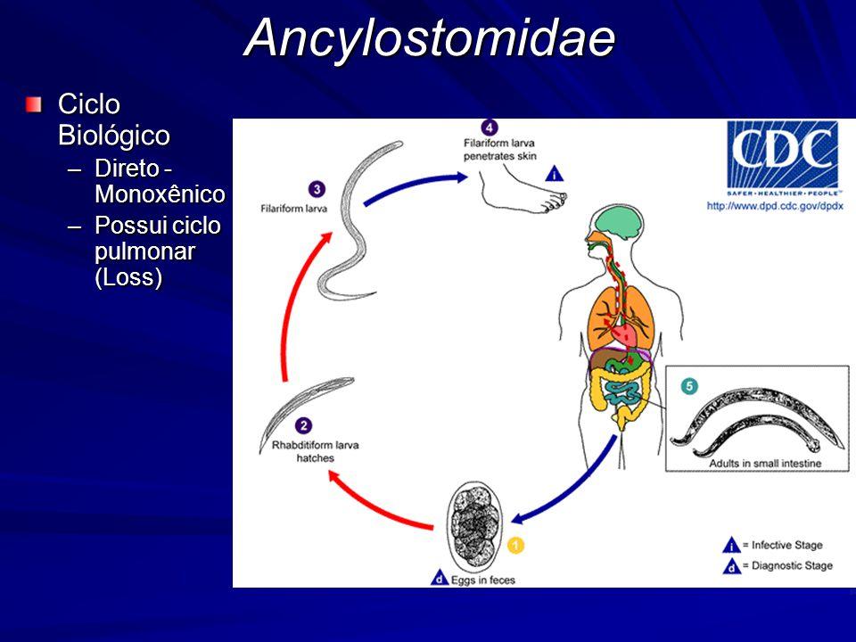 Ancylostomidae Ciclo Biológico Direto - Monoxênico