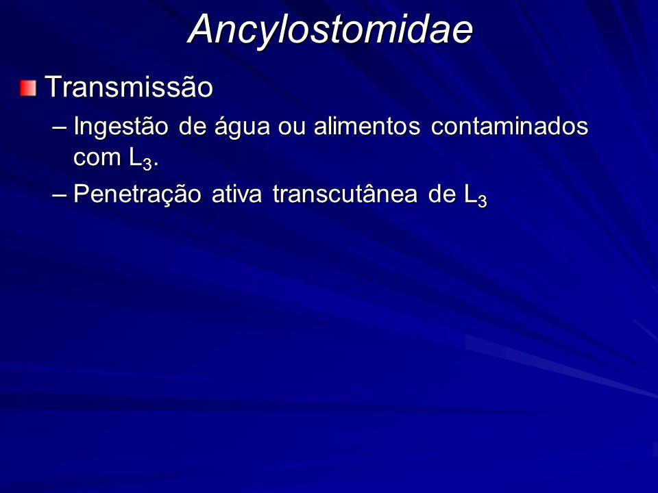 Ancylostomidae Transmissão