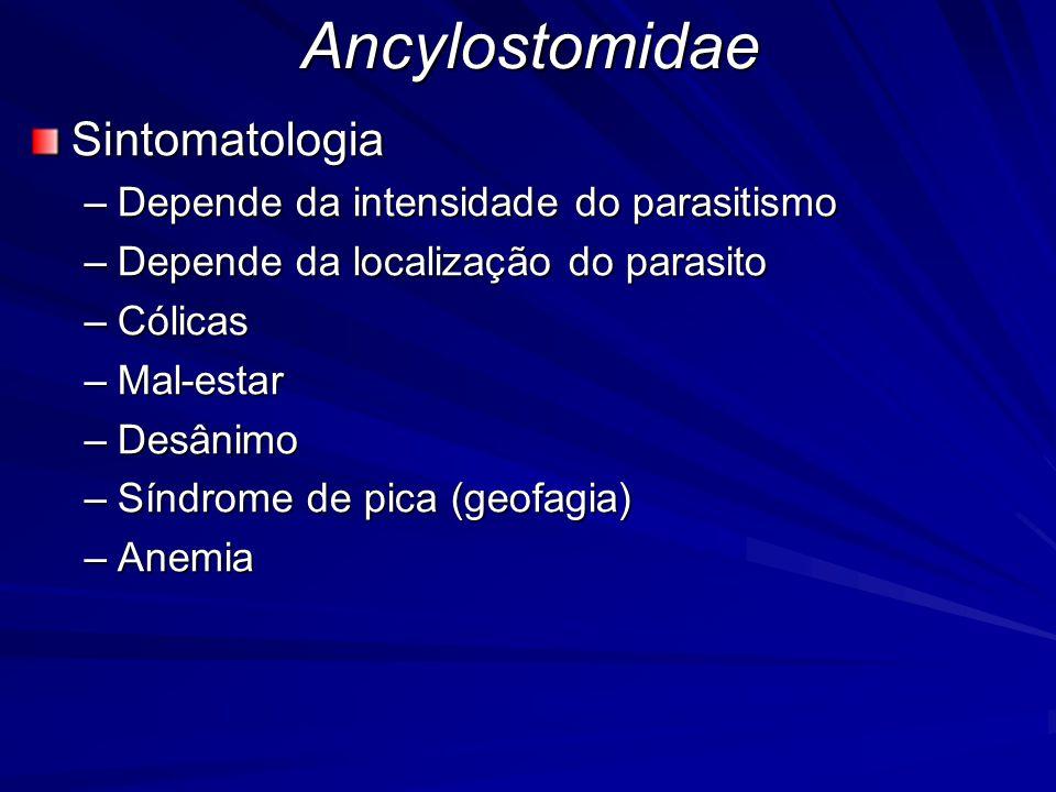 Ancylostomidae Sintomatologia Depende da intensidade do parasitismo