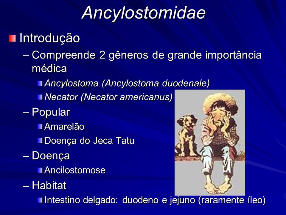 Ancylostomidae Introdução