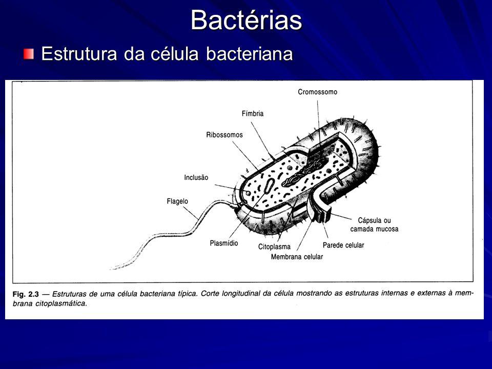 Bactérias Estrutura da célula bacteriana