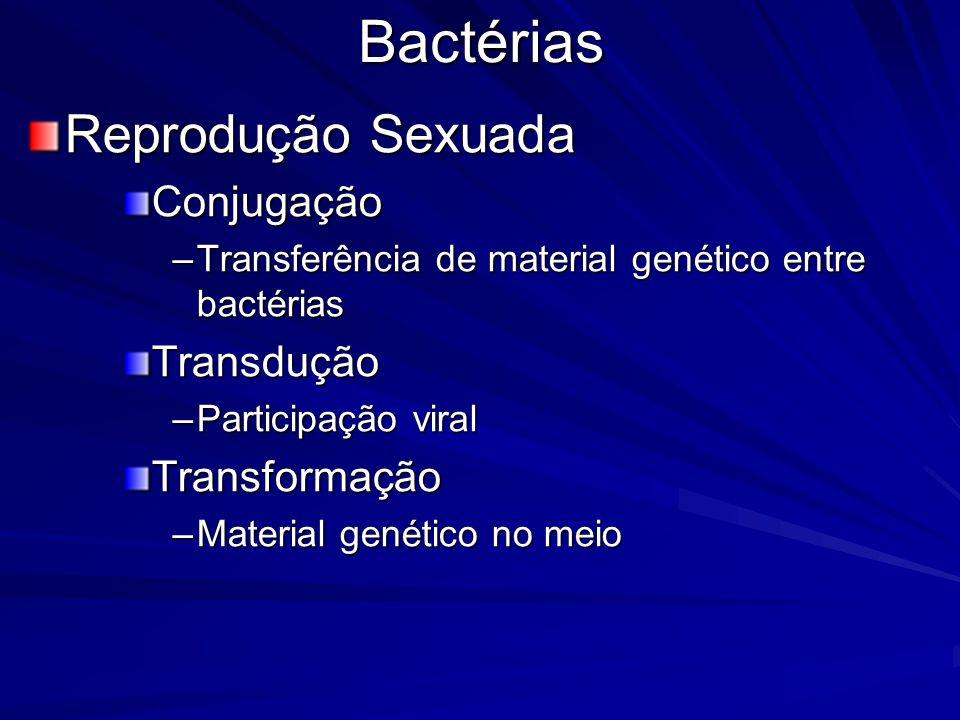 Bactérias Reprodução Sexuada Conjugação Transdução Transformação
