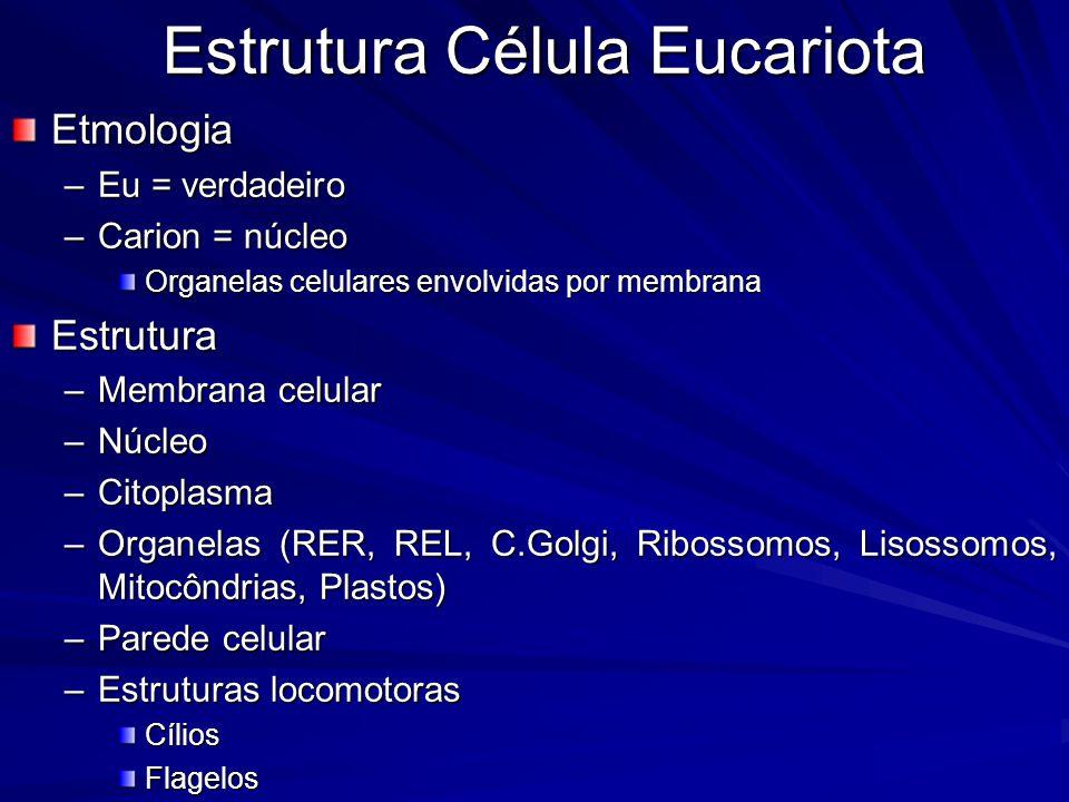 Estrutura Célula Eucariota