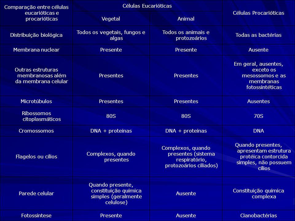 Comparação entre células eucarióticas e procarióticas
