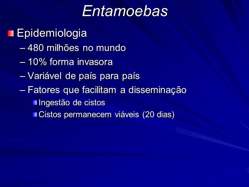 Entamoebas Epidemiologia 480 milhões no mundo 10% forma invasora