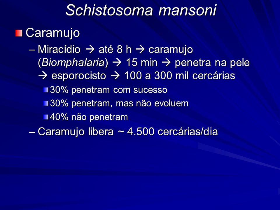 Schistosoma mansoni Caramujo
