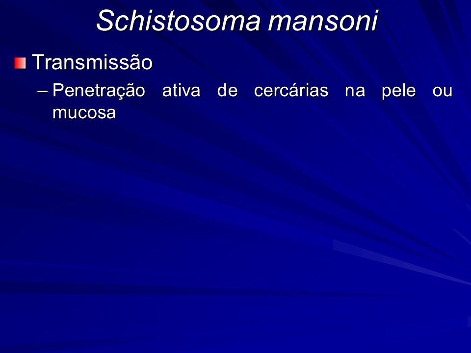 Schistosoma mansoni Transmissão