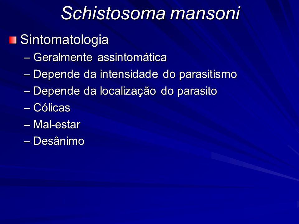 Schistosoma mansoni Sintomatologia Geralmente assintomática