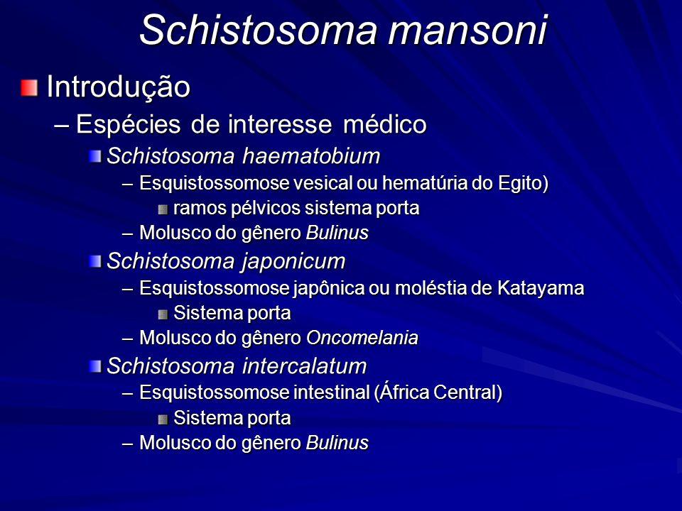 Schistosoma mansoni Introdução Espécies de interesse médico