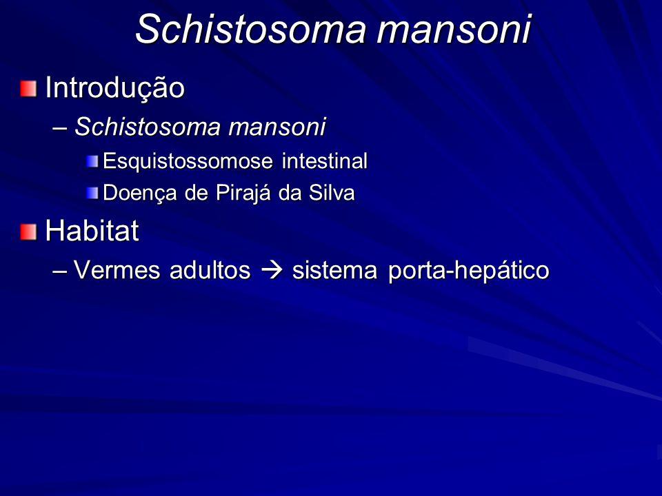 Schistosoma mansoni Introdução Habitat Schistosoma mansoni