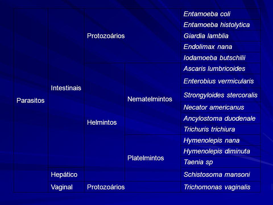 Parasitos Intestinais. Protozoários. Entamoeba coli. Entamoeba histolytica. Giardia lamblia. Endolimax nana.