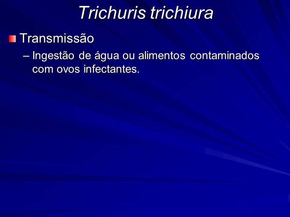 Trichuris trichiura Transmissão