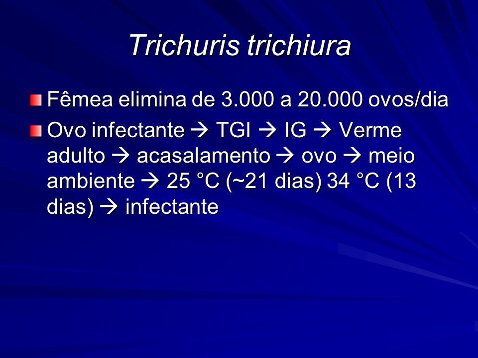 Trichuris trichiura Fêmea elimina de 3.000 a 20.000 ovos/dia