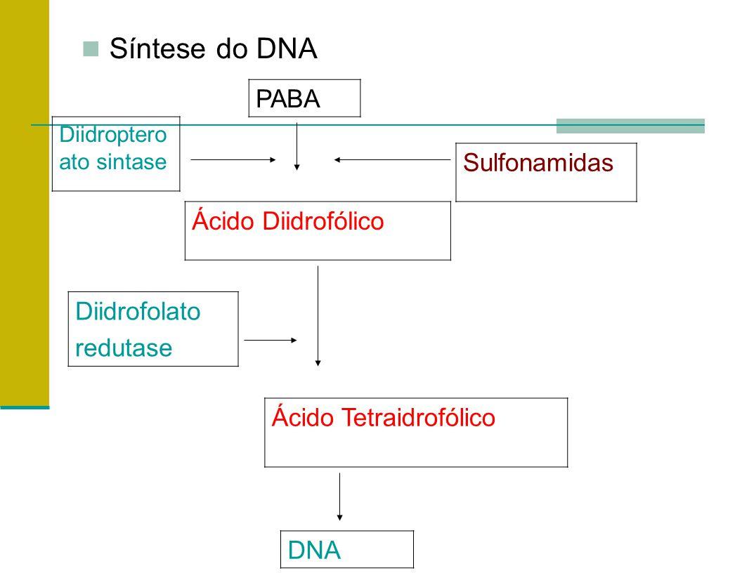 Síntese do DNA PABA Sulfonamidas Ácido Diidrofólico Diidrofolato