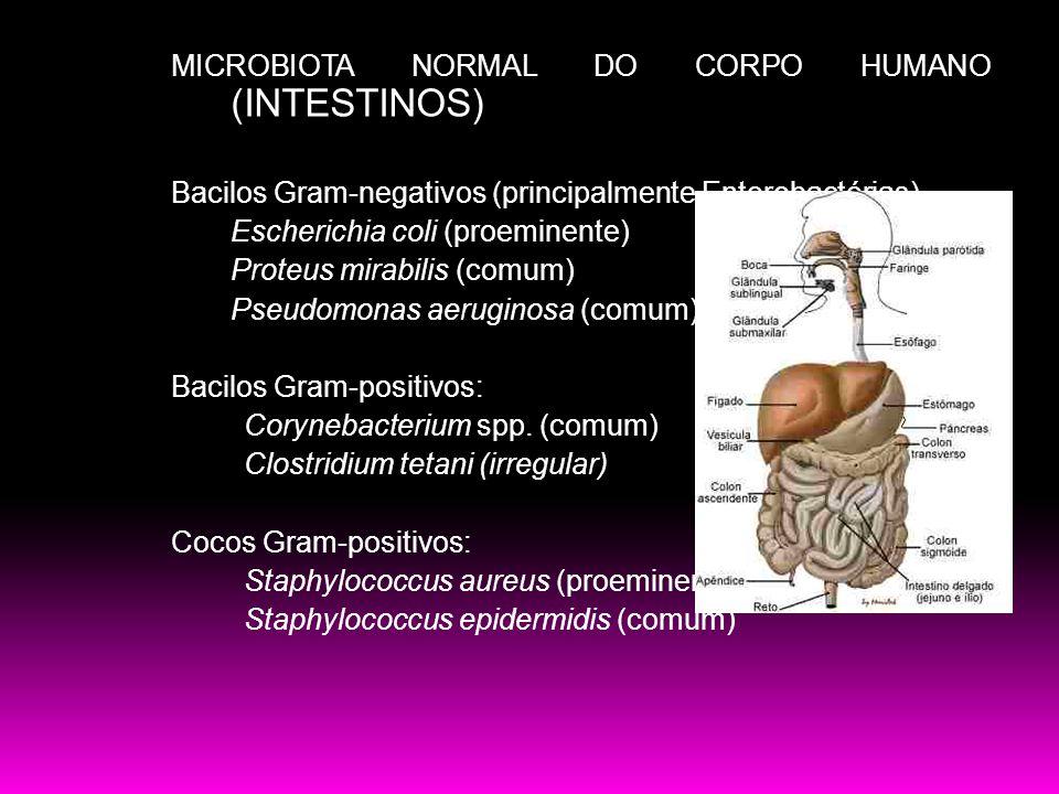 MICROBIOTA NORMAL DO CORPO HUMANO (INTESTINOS) Bacilos Gram-negativos (principalmente Enterobactérias) Escherichia coli (proeminente) Proteus mirabilis (comum) Pseudomonas aeruginosa (comum) Bacilos Gram-positivos: Corynebacterium spp.