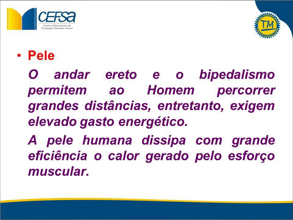 Pele O andar ereto e o bipedalismo permitem ao Homem percorrer grandes distâncias, entretanto, exigem elevado gasto energético.