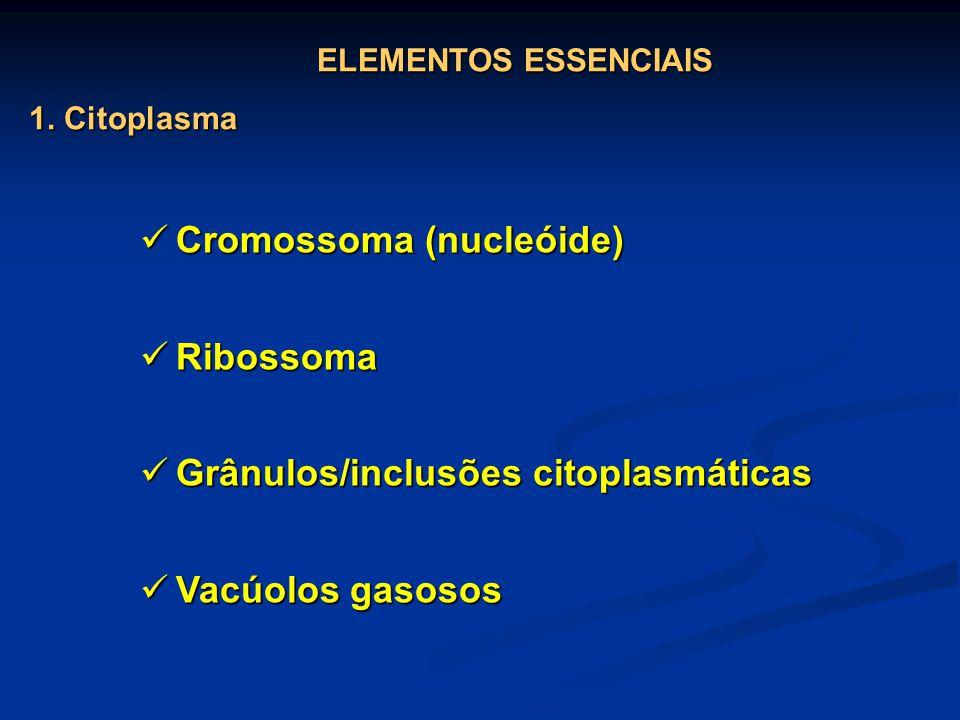Cromossoma (nucleóide) Ribossoma
