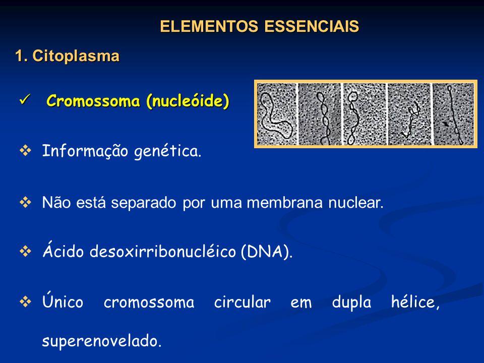 ELEMENTOS ESSENCIAIS 1. Citoplasma. Cromossoma (nucleóide) Informação genética. Ácido desoxirribonucléico (DNA).