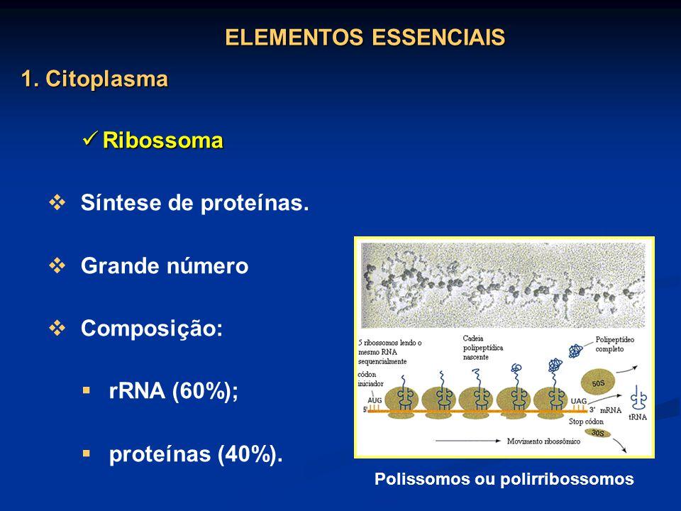 Polissomos ou polirribossomos