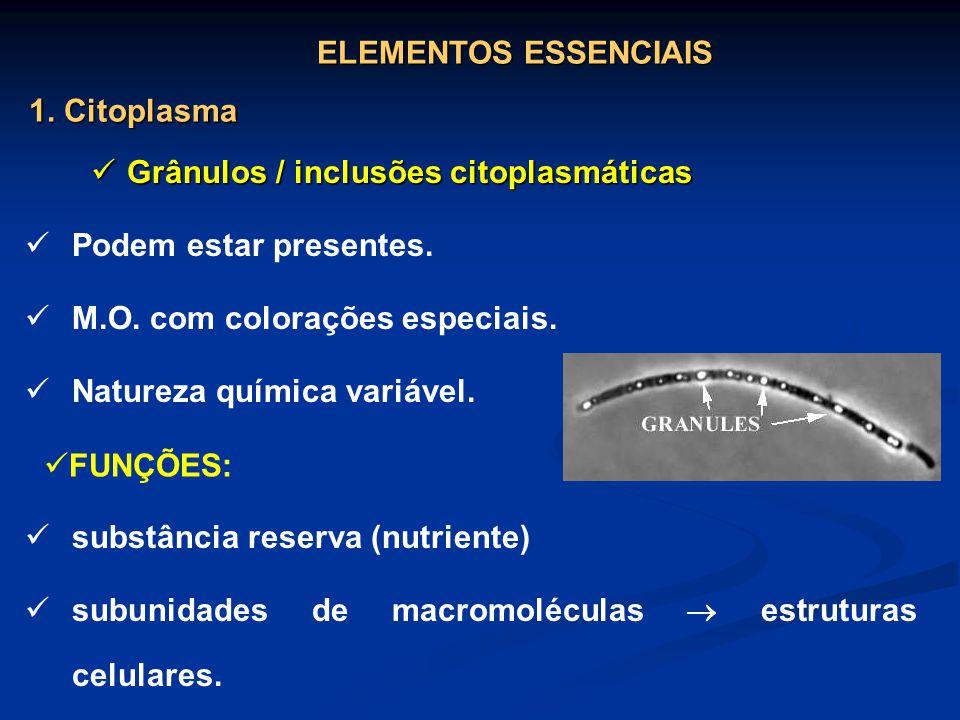 ELEMENTOS ESSENCIAIS 1. Citoplasma. Grânulos / inclusões citoplasmáticas. Podem estar presentes. M.O. com colorações especiais.