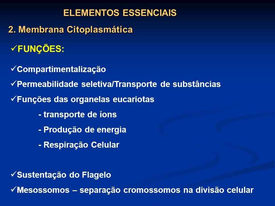2. Membrana Citoplasmática