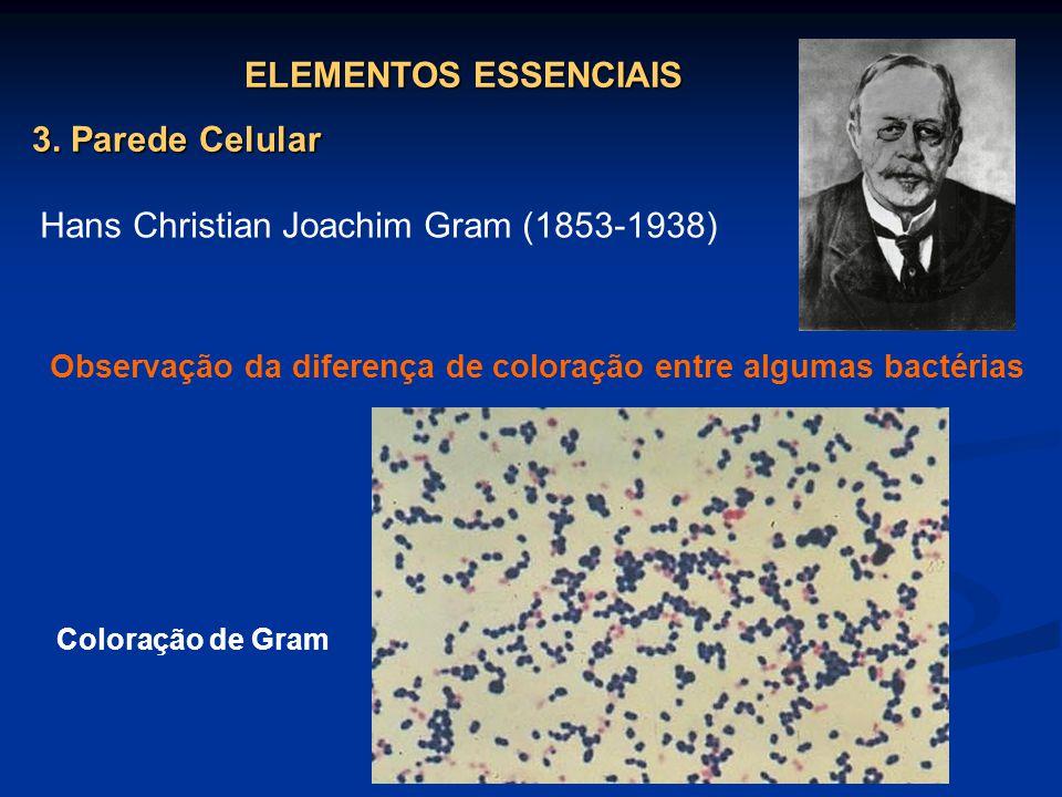 Observação da diferença de coloração entre algumas bactérias