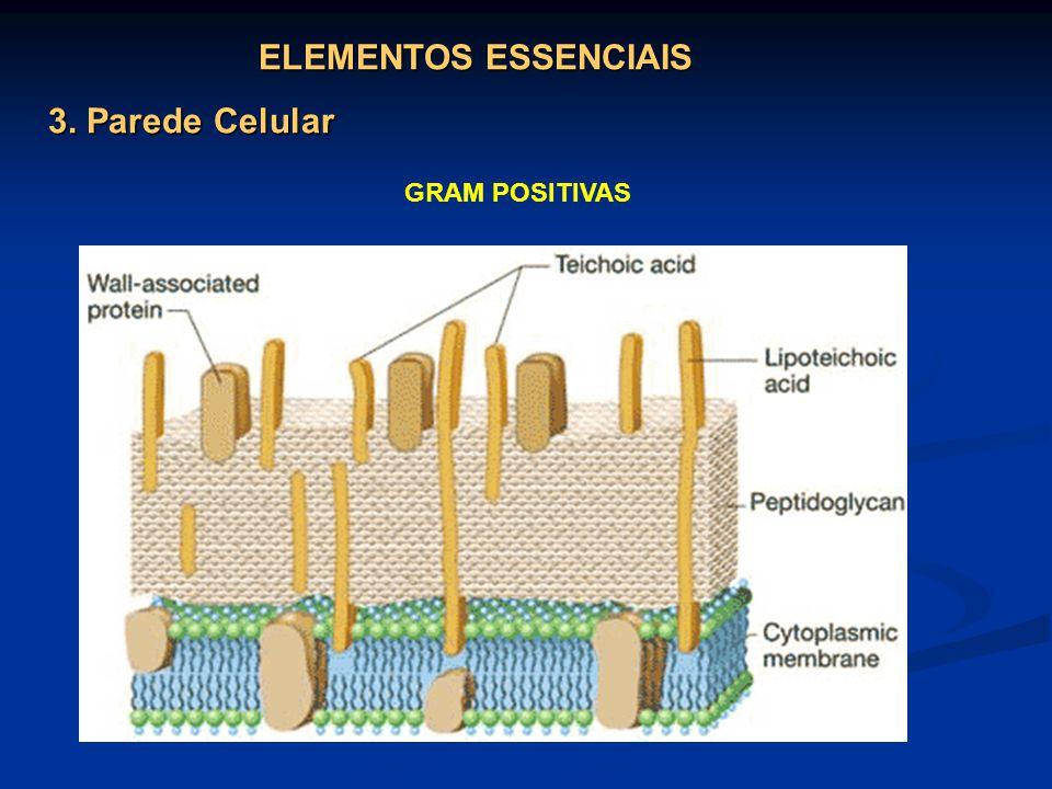 ELEMENTOS ESSENCIAIS 3. Parede Celular GRAM POSITIVAS