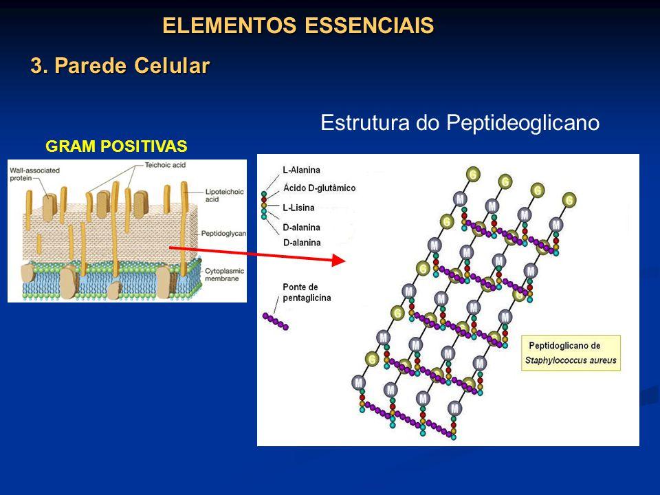 Estrutura do Peptideoglicano
