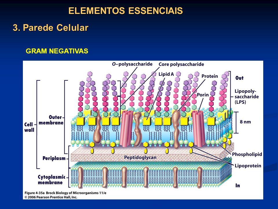 ELEMENTOS ESSENCIAIS 3. Parede Celular GRAM NEGATIVAS
