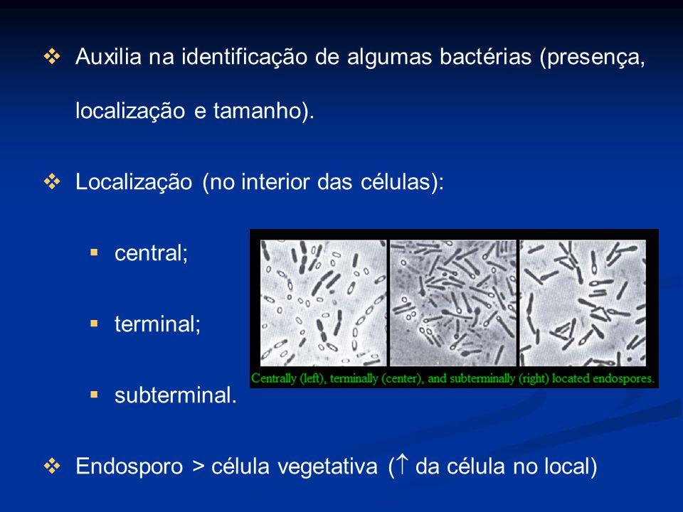 Auxilia na identificação de algumas bactérias (presença, localização e tamanho).