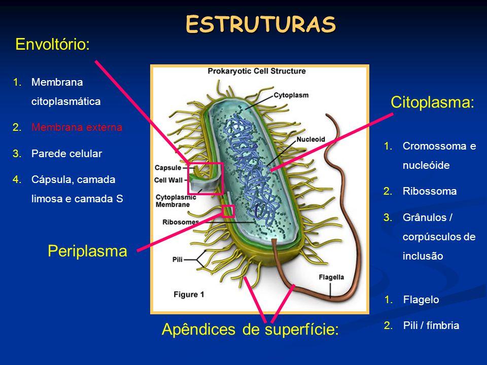 ESTRUTURAS Envoltório: Citoplasma: Periplasma Apêndices de superfície: