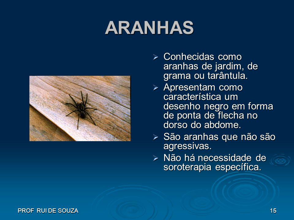 ARANHAS Conhecidas como aranhas de jardim, de grama ou tarântula.