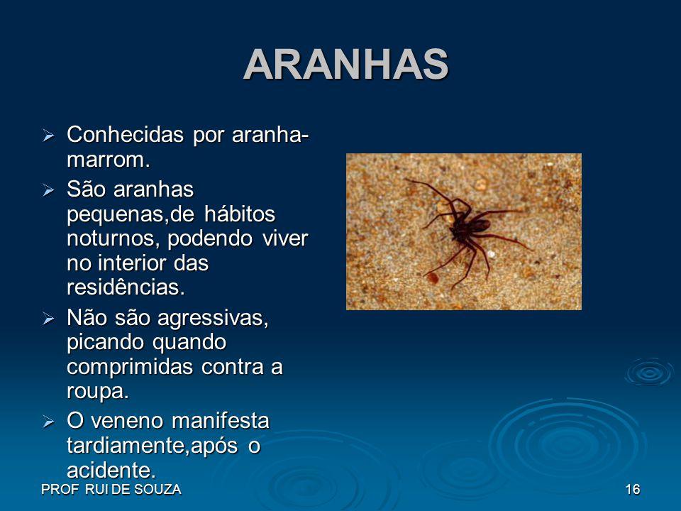 ARANHAS Conhecidas por aranha-marrom.