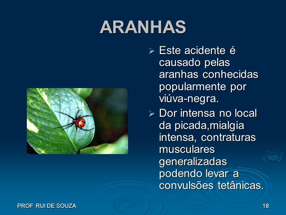 ARANHAS Este acidente é causado pelas aranhas conhecidas popularmente por viúva-negra.