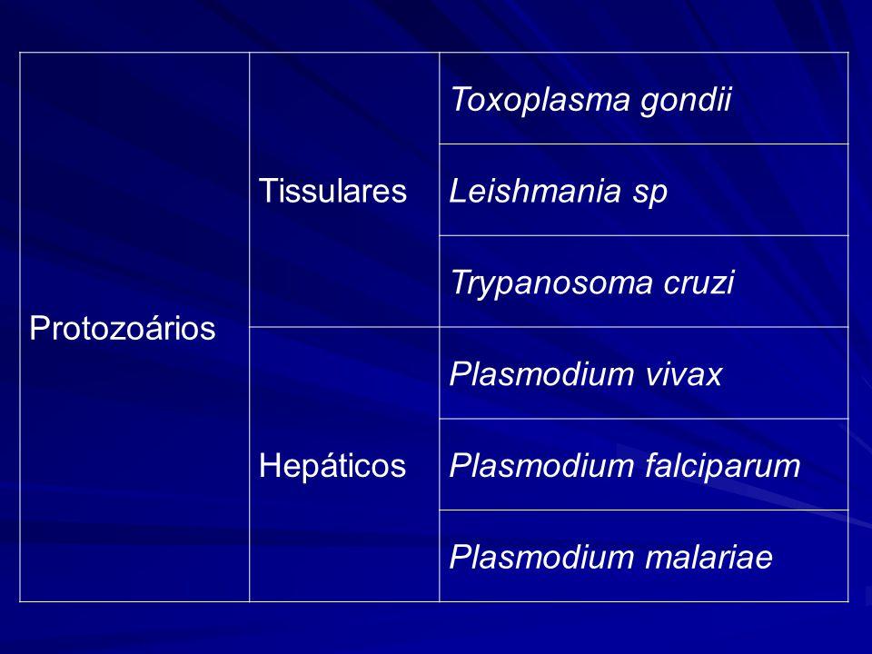 Protozoários Tissulares. Toxoplasma gondii. Leishmania sp. Trypanosoma cruzi. Hepáticos. Plasmodium vivax.