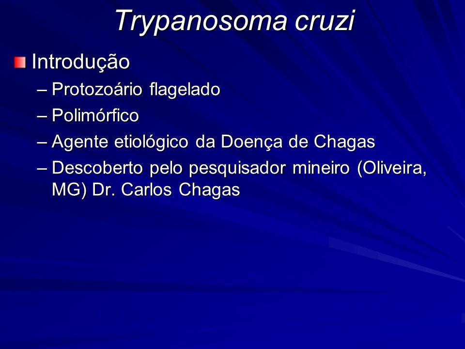 Trypanosoma cruzi Introdução Protozoário flagelado Polimórfico