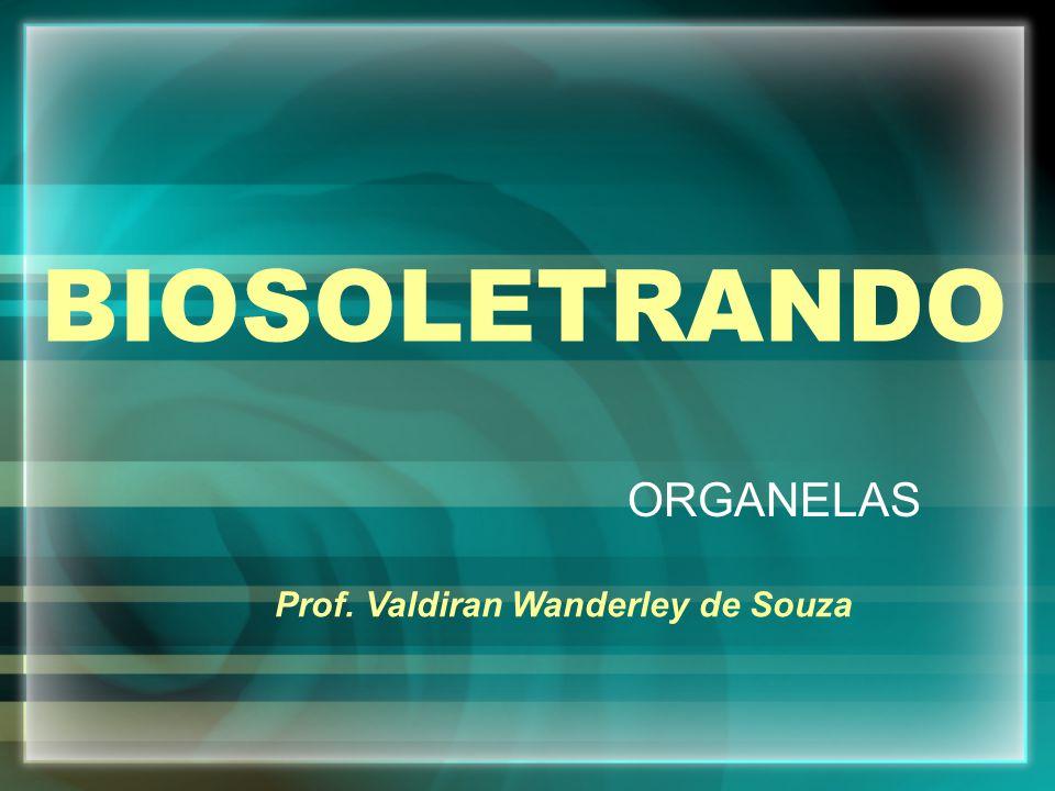 BIOSOLETRANDO ORGANELAS Prof. Valdiran Wanderley de Souza