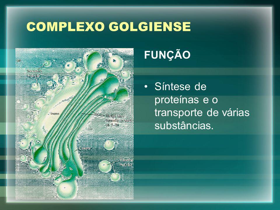 COMPLEXO GOLGIENSE FUNÇÃO