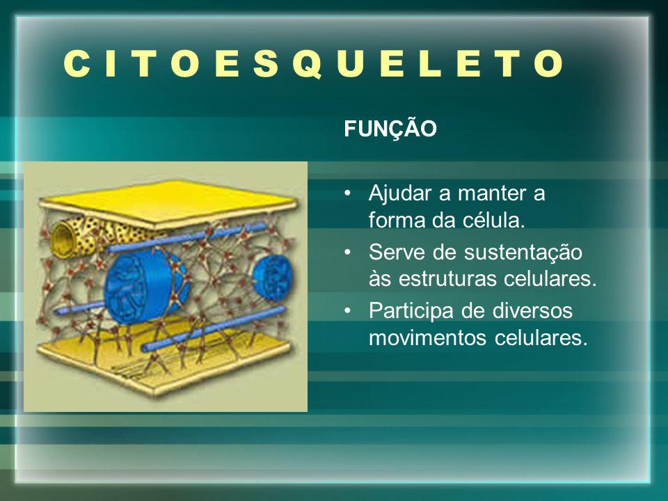 C I T O E S Q U E L E T O FUNÇÃO Ajudar a manter a forma da célula.
